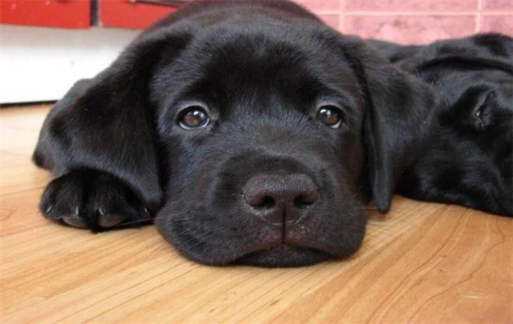 стресс у собак