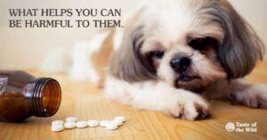 токсичные для животных лекарства